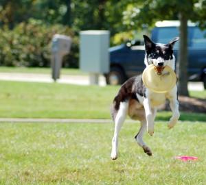 Pes při výskoku